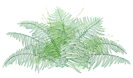 Drawing of outline fossil forest plant Fern with fronds in pastel green colored isolated on white background. Contour Fern bush with ornate leaf for summer design. Illustration