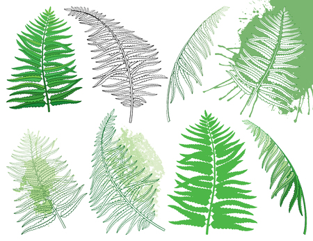 Drawing of set with outline fossil forest Fern fronds in black and pastel green colored isolated on white background. Ornate Fern leaves in contour style for summer design. Vector Illustratie