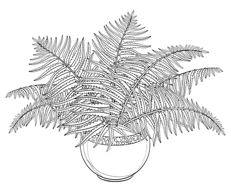 Drawing of outline fossil forest plant Fern with fronds in flowerpot in black isolated on white background. Contour Fern bush with ornate foliage for summer design or floral coloring book. Vettoriali
