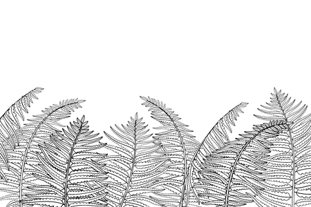 Horizontal composition of outline fossil forest plant Fern with fronds in black isolated on white background. Drawing of contour Fern with ornate leaf for summer design or coloring book.