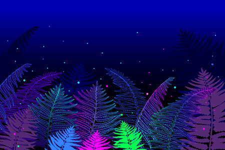 Horizontal composition of outline fossil forest plant Fern with frond on the black background. Drawing of magic forest with contour ornate Fern foliage for fairy summer design.