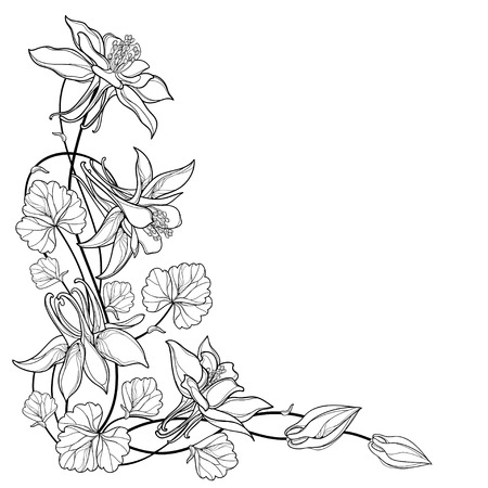 Corner bouquet with outline Aquilegia or Columbine flower, bud and leaf in black isolated on white background. Composition with contour ornate Aquilegia for summer design or coloring book.