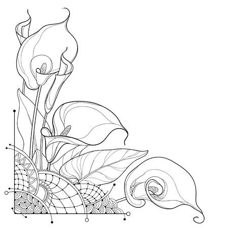 Ramo de esquina de contorno Calla lily flor o Zantedeschia, brote y hoja ornamentada en negro aislado sobre fondo blanco. Manojo de flores de cala tropical de contorno para diseño de verano o libro para colorear. Ilustración de vector
