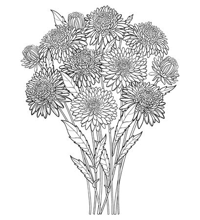 Bouquet with outline Aster flower, ornate foliage and bud in black isolated on white background. Contour blooming Aster bunch for summer or autumn design and coloring book.