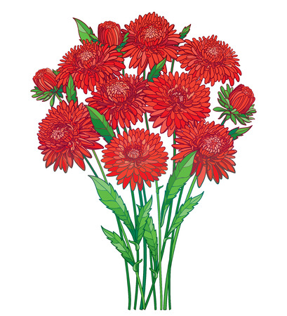 Bouquet with outline red Aster flower, ornate green foliage and bud isolated on white background. Contour blossoming red Aster bunch for summer or autumn design. Иллюстрация