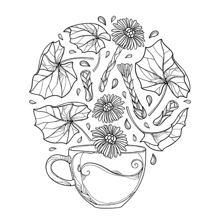 Cup of Tussilago farfara or coltsfoot herbal tea with leaves and flower.