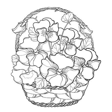 Wicker basket isolated on white background. Contour Pansy flower bouquet for summer design or coloring book.
