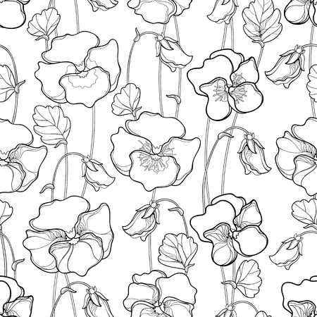 Pansy or Heartsease or Viola flower on white background. Contour Pansy flower for summer design or coloring book. Vettoriali
