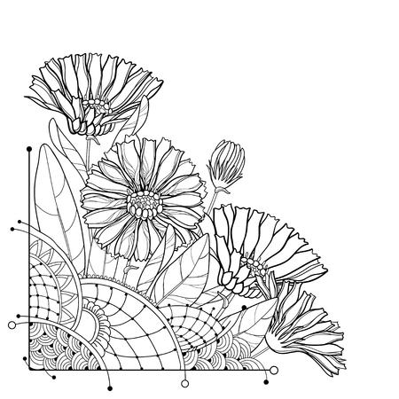 Corner of bouquet of flowers on white background. Calendula for herbal design or plant book. Ilustração