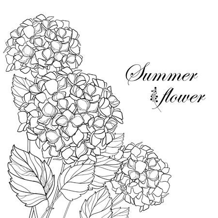 Corner of a bouquet of flowers. Hydrangea for your design and coloring book. Ilustração Vetorial