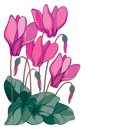 Bouquet of pink flowers with outline Perennial Alpine Mountain Flowers For Spring Design. Illustration