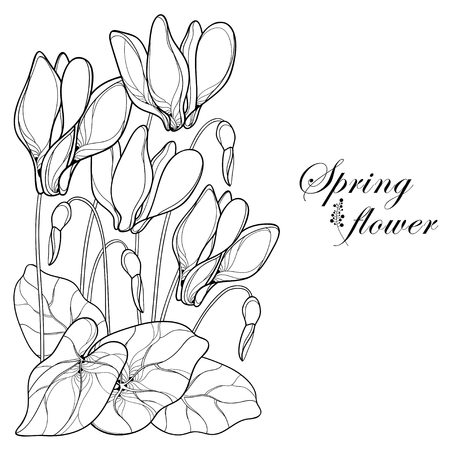Corner bouquet of flowers on white background. Perennial Alpine mountain flower in contour for spring design or coloring book.