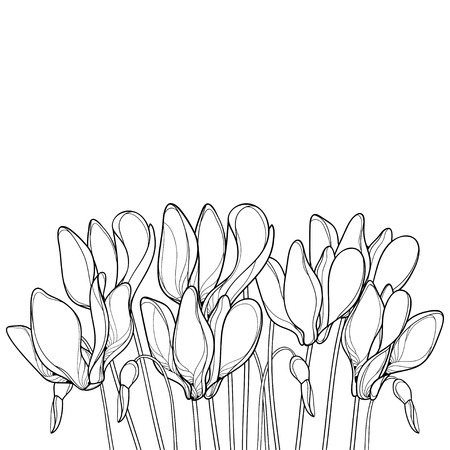 Bouquet with outline Perennial Alpine mountain flowers in spring for your design or coloring book.