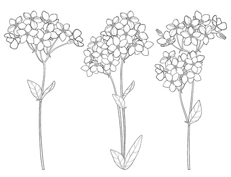 Set with outline flower background. Wild design for spring design or coloring book. Vettoriali