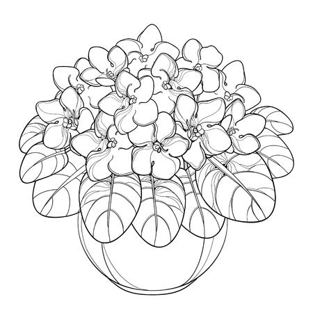 Blumenstrauß mit Umriss Saintpaulia oder African Violet Viola im Konturstil für Malbuch.