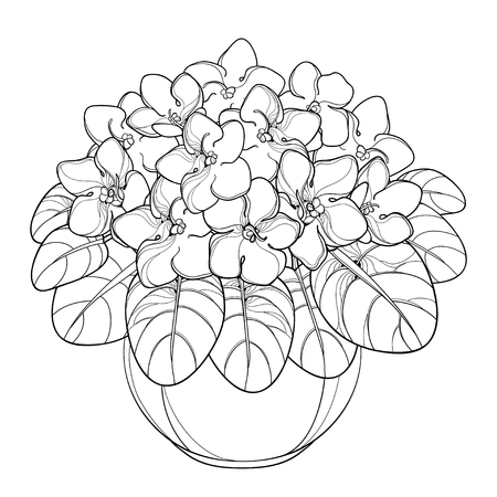 Bouquet with outline Saintpaulia or African violet Viola in contour style for coloring book.