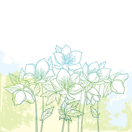 Bouquet with outline Helleborus on the pastel background. Ornate flower bunch in contour style for spring design.