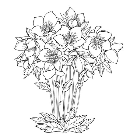 Bouquet with outline Helleborus in black isolated on white background. Ornate flower bunch in contour for spring design or coloring page.