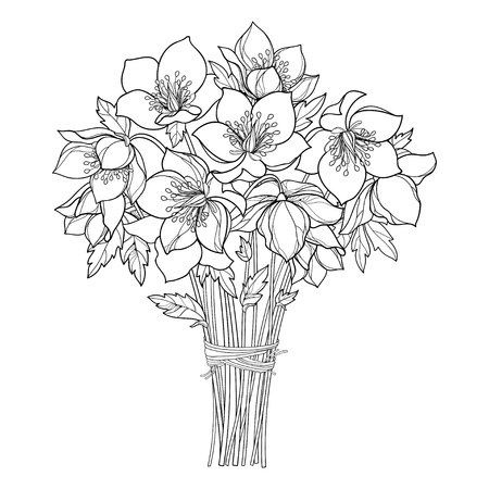 Bouquet with outline Helleborus in black isolated on white background. Flower bunch in contour for spring design or coloring book.