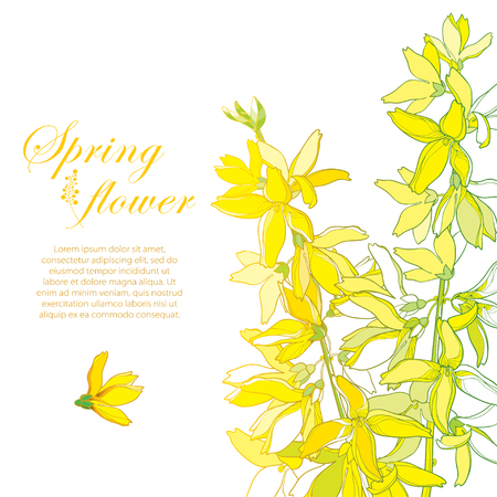Bunch with outline Forsythia flower, branch, leaves in pastel yellow isolated on white.