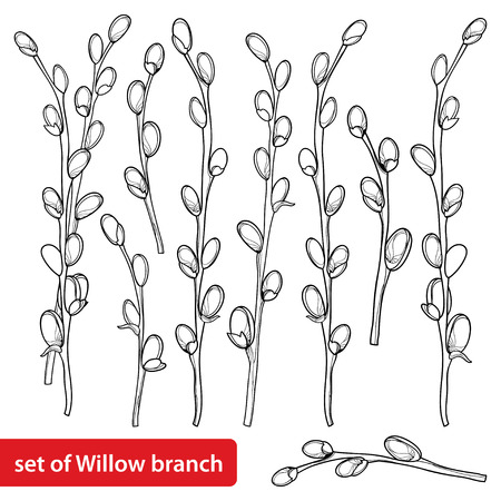 Set with outline pussy willow isolated on white background.