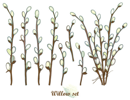 Set with outline willow twigs in pastel isolated on white background.