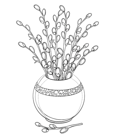 Branch with pussy willow in willow contour for springtime design and Easter coloring book. Ilustração