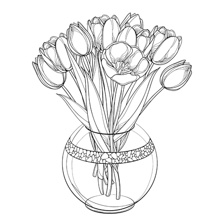 Bouquet wit tulip, bud and leaves isolated on white background. Illustration