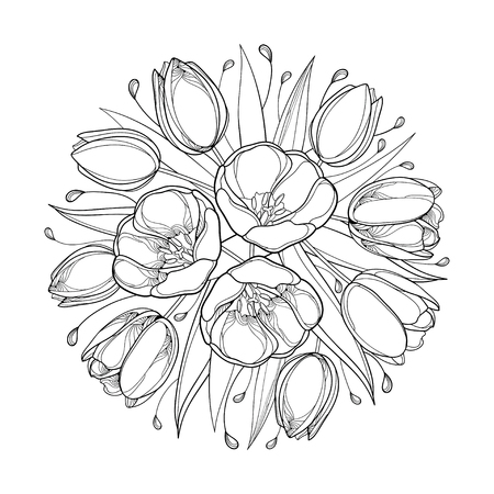 Bunch of contour tulips for greeting spring design or coloring book. Illustration