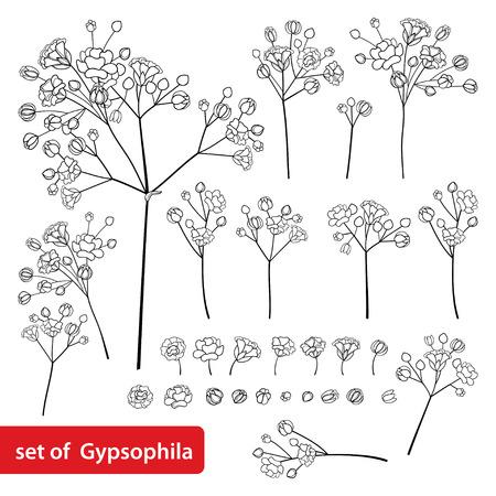 Ensemble de fleur de gypsophile ou de gypsophile en noir isolé sur blanc.
