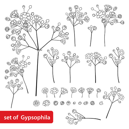 Set of Gypsophila or Baby's breath flower in black isolated on white.