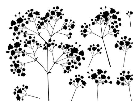 Satz von Gypsophila oder Baby's Breath Branch. Vektorgrafik