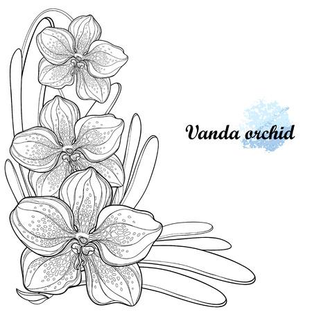 Exotische verzierte Vanda in Kontur für Sommermalbuch.