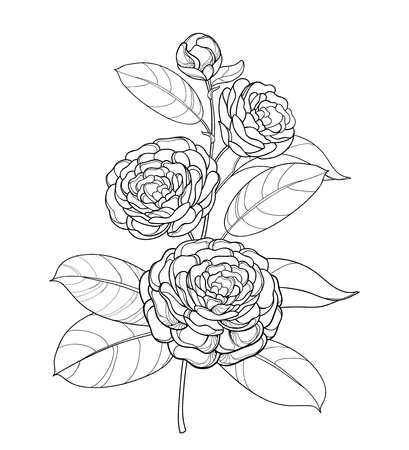 Camellia flower bunch in black, bud and foliage isolated on white background. Vector Illustratie