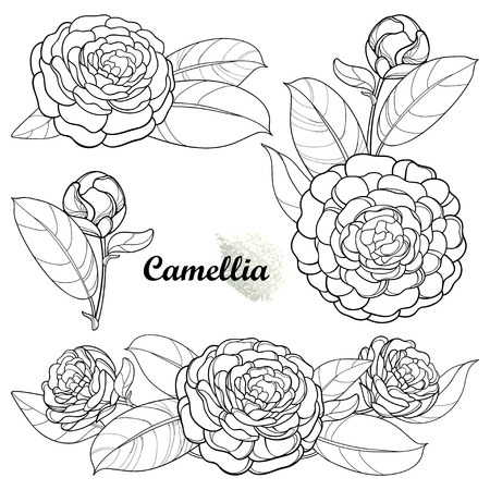 Set with camellia flower isolated on white background. Vector Illustratie
