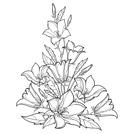 Bluebell bunch in contour for spring coloring book.