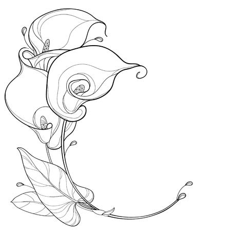 Ramo de flores con calla para libro de colorear de verano. Ilustración de vector