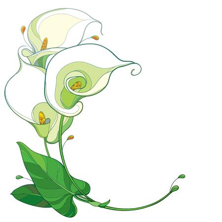 Contorno de manojo de flores de cala tropical para el diseño de verano. Ilustración de vector