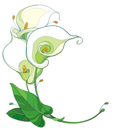 Contour tropische calla bloembos voor zomerontwerp. Vector Illustratie