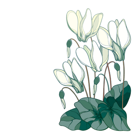 Corner bouquet with outline pastel white Cyclamen. Ilustracja