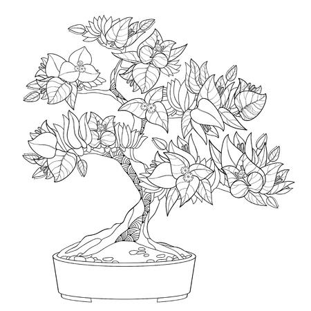 Tropical Bougainvillea bonsai in contour for summer coloring book.