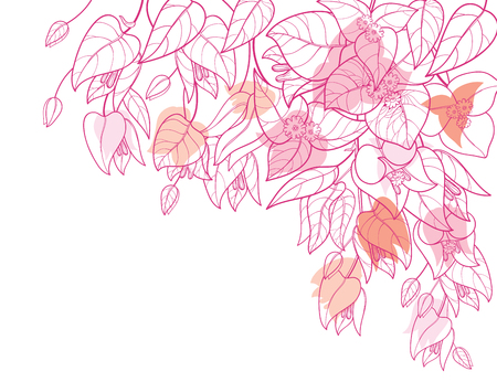 Corner bouquet of bougainvillea flower bunch isolated on white background. Vector Illustration