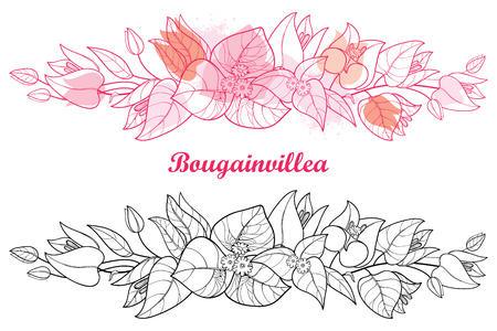 Border of bougainvillea, bud and leaf isolated on white background.
