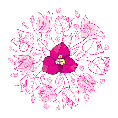 Round bouquet of Bougainvillea in pink isolated.