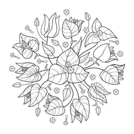 Round bouquet of Bougainvillea in black isolated. Vector Illustration