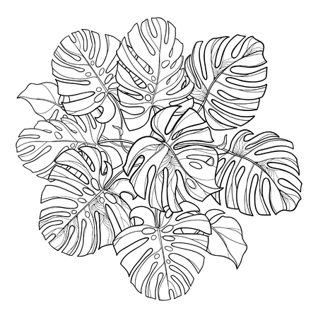 Outline round bunch of Monstera leaf isolated.
