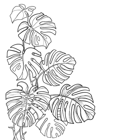 Corner contour Monstera leaf for summer coloring book.