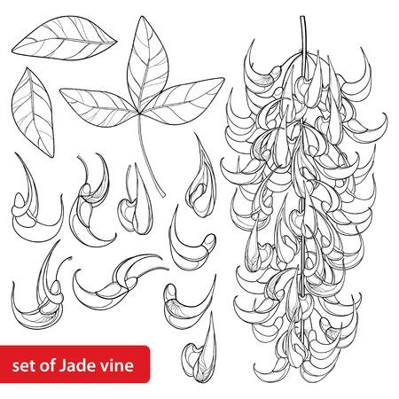 Set of turquoise Jade vine isolated.