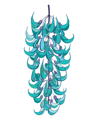 Bunch of turquoise Jade vine isolated. Stock Illustratie