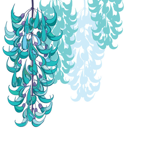 Tropical jade vine for exotic greeting design isolated.